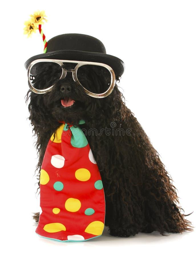 De clown van de hond stock afbeelding
