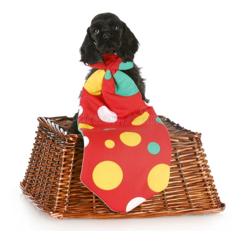 De clown van het puppy royalty-vrije stock fotografie
