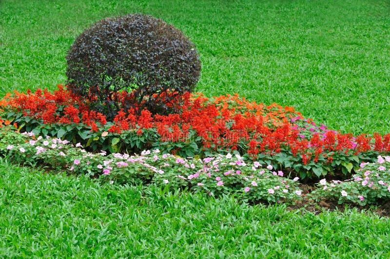 De cluster van de struik en van de bloem in tuin royalty-vrije stock fotografie