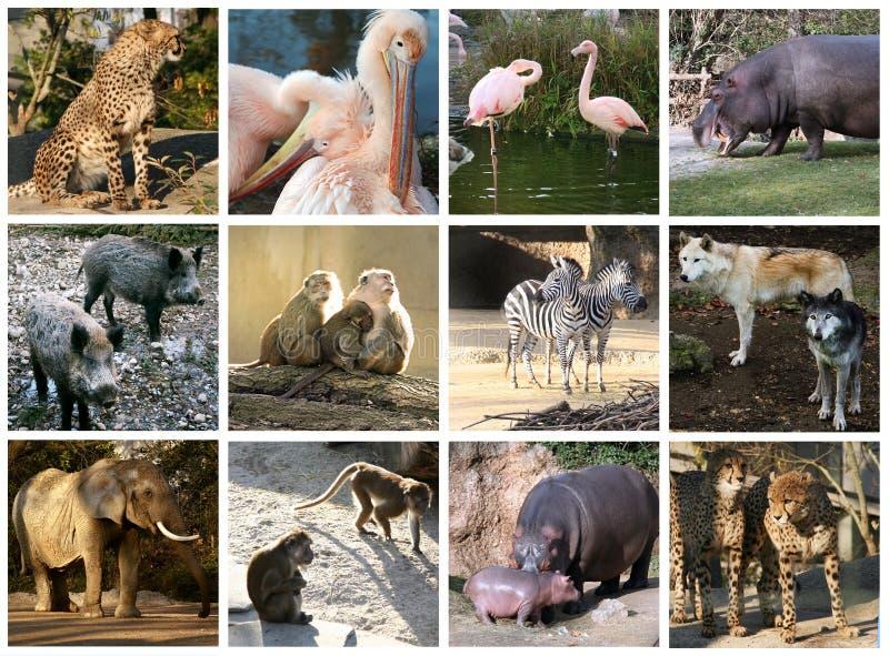De collage van de dierentuin royalty-vrije stock afbeelding