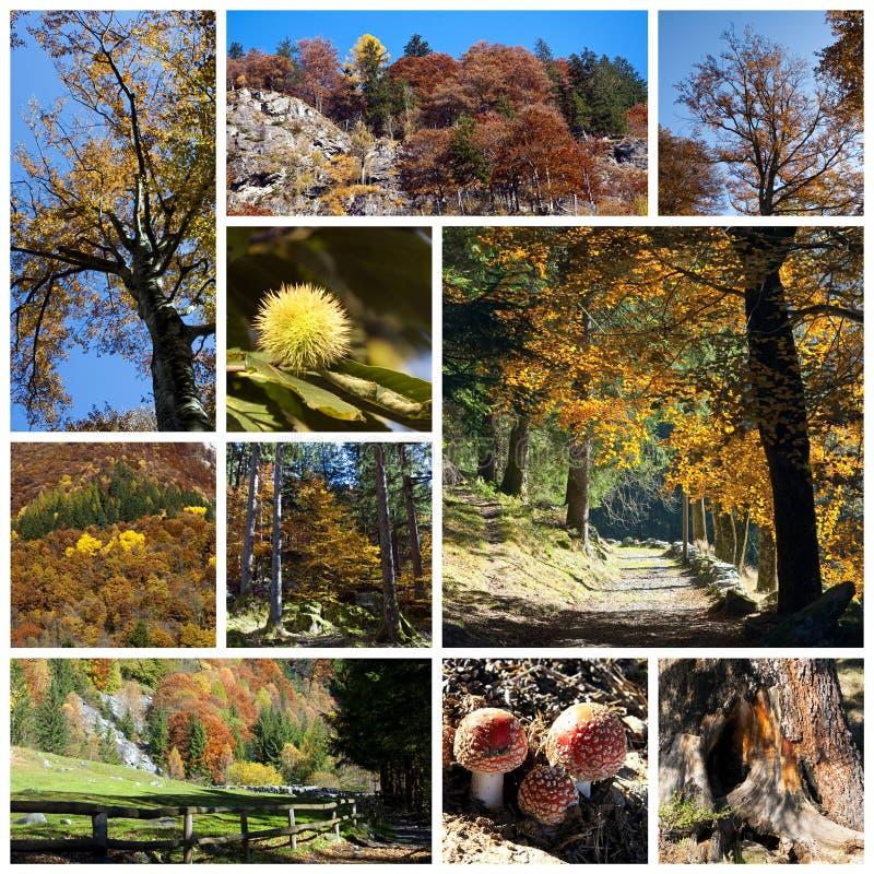 De collage van de herfst royalty-vrije stock fotografie