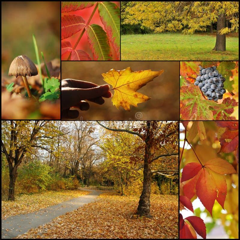 De collage van de herfst stock foto