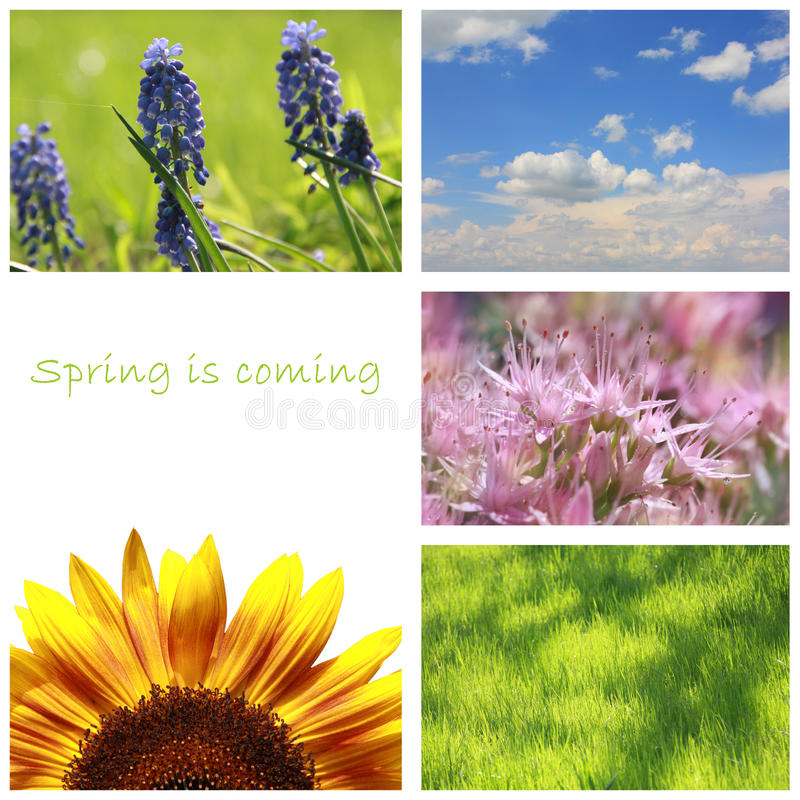De collage van de lente royalty-vrije stock foto's