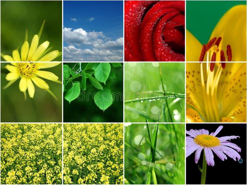 De collage van de lente. stock afbeelding