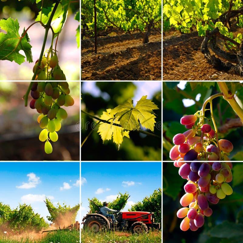 De collage van de wijngaard stock fotografie