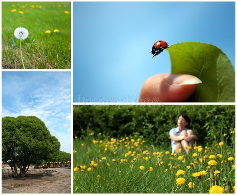 De collage van de zomer stock foto