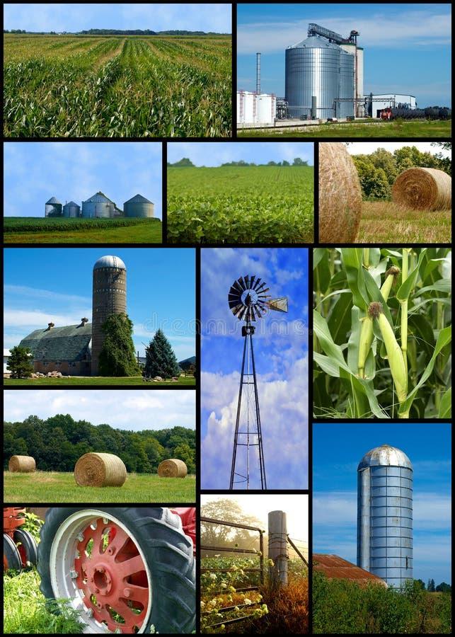 De collage van het landbouwbedrijf stock foto's