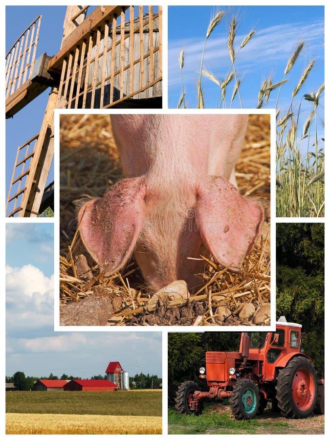 De collage van het landbouwbedrijf royalty-vrije stock fotografie