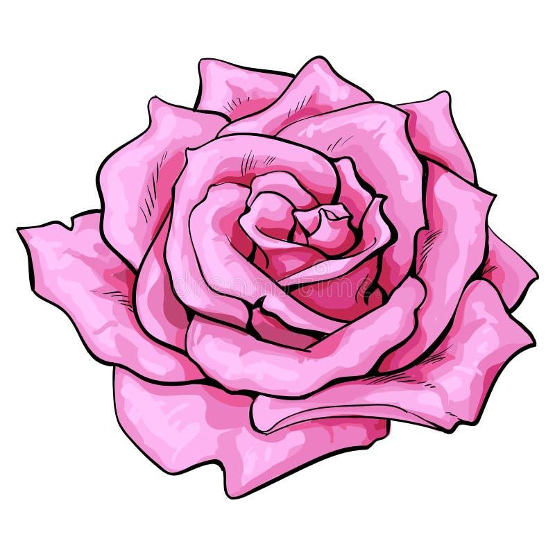 De color rosa oscuro subió, el ejemplo aislado del vector del bosquejo de la visión superior ilustración del vector