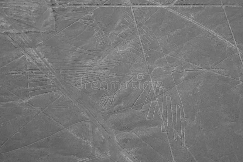 De Condor - Nasca-Lijnen - Peru royalty-vrije stock afbeelding
