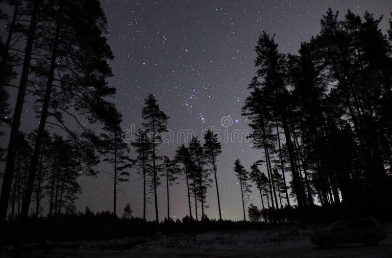 De constellatie van de sterrenorion van de nachthemel over bos royalty-vrije stock afbeeldingen