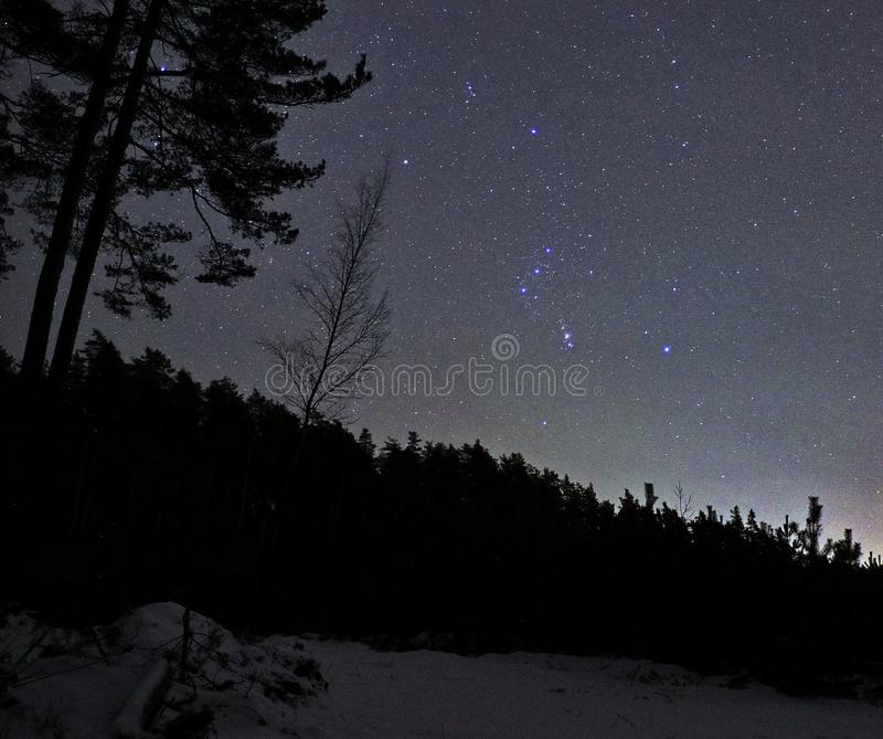 De constellatie van de sterrenorion van de nachthemel over bos stock afbeeldingen