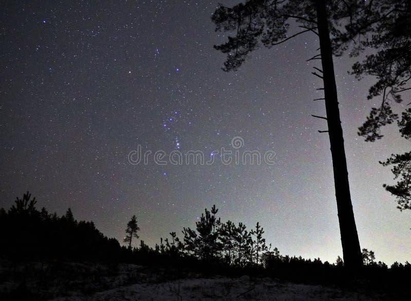 De constellatie van de sterrenorion van de nachthemel over bos stock foto