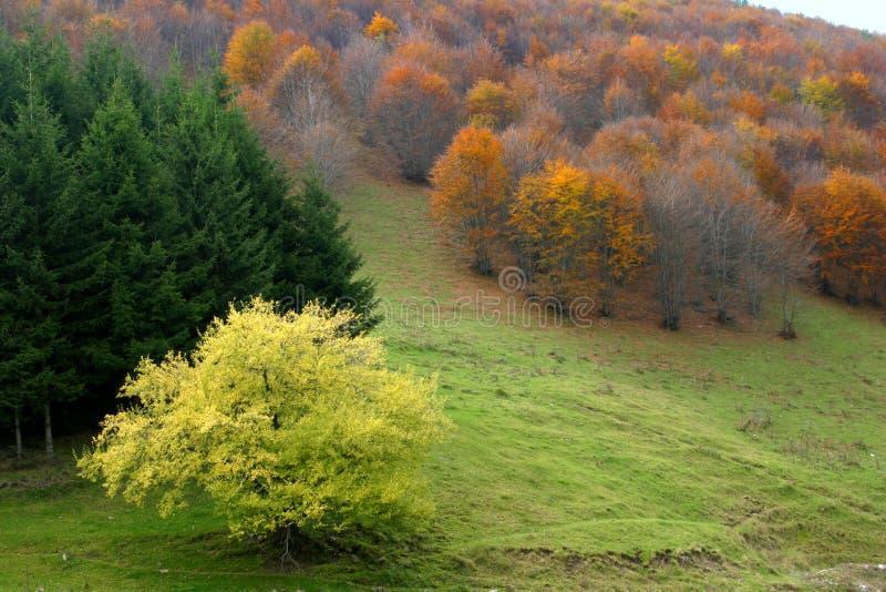 De contrasten van de herfst royalty-vrije stock foto's