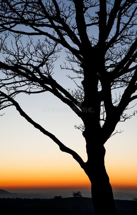 De coucher du soleil arbres cependant dans les collines de Chiltern photographie stock