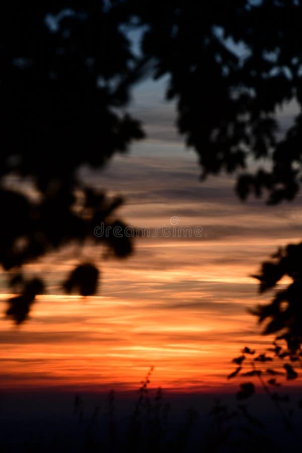 De coucher du soleil arbres cependant dans les collines de Chiltern image stock