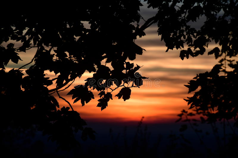 De coucher du soleil arbres cependant dans les collines de Chiltern photographie stock libre de droits