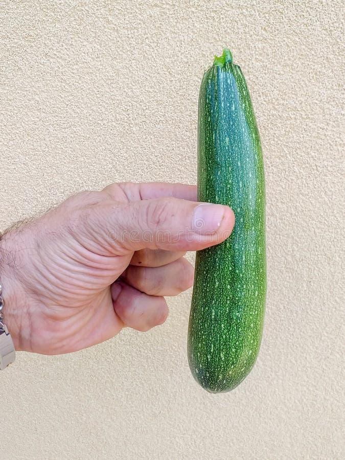 De courgette of de courgette zijn species van de Kalebasachtigenfamilie de van wie vruchten gebruikte onrijp zijn Het is een jaar royalty-vrije stock foto's