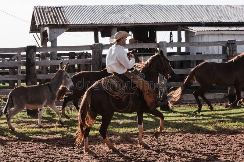 De cowboy die een paard berijden drijft van een landbouwbedrijf bijeen royalty-vrije stock afbeelding