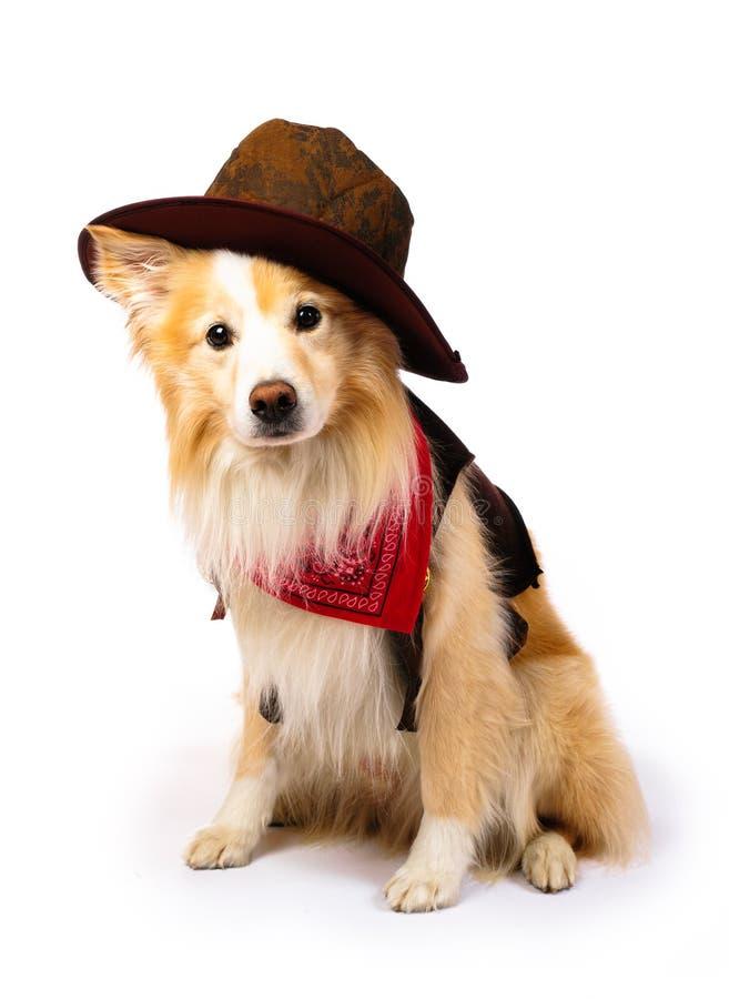De Cowboy van de Collie van de grens stock foto