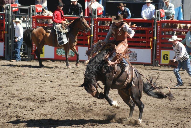 De Cowboy van het Paard van Bucking stock afbeelding
