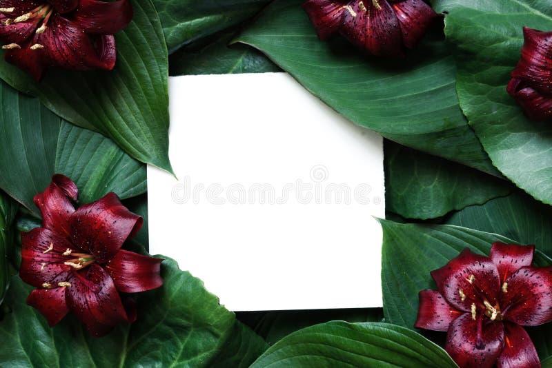 De creatieve die lay-out van tropische bladeren en rode lelie wordt gemaakt bloeit met lege document kaart Vlak leg Spot omhoog stock afbeelding