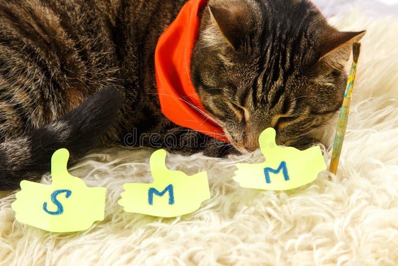 De creatieve kat slaapt met SMM-etiketten stock afbeeldingen