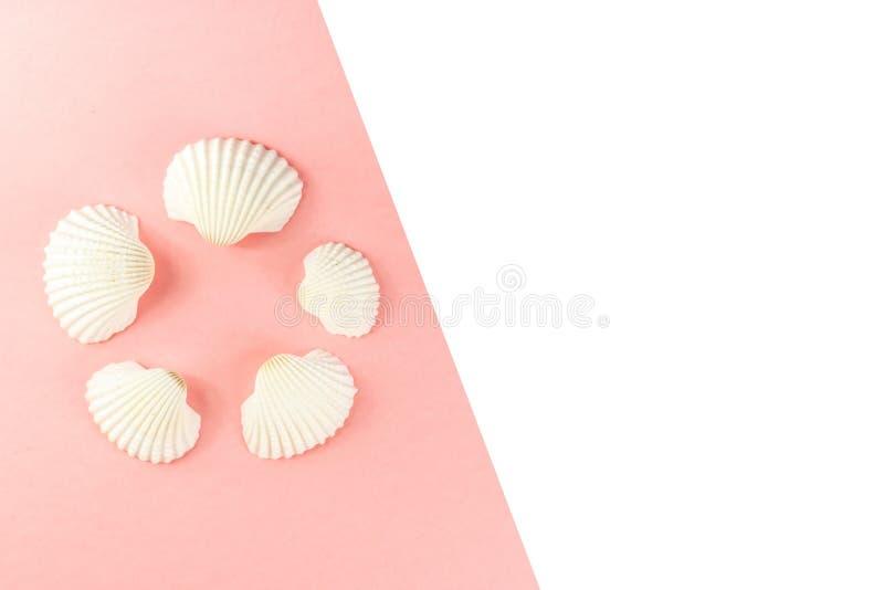 De creatieve vlakte legt fotografie met exemplaarruimte Collage van zeeschelpen op roze achtergrond wordt geïsoleerd die Vlak leg royalty-vrije stock foto