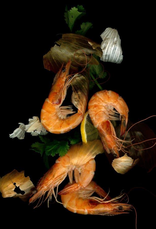 De crevette rose toujours durée images stock