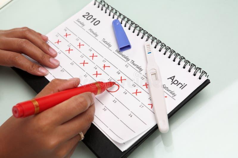 De cricling kalender van de hand met zwangerschapstest stock foto