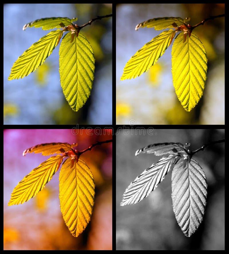 De cuatro estaciones foto de archivo libre de regalías