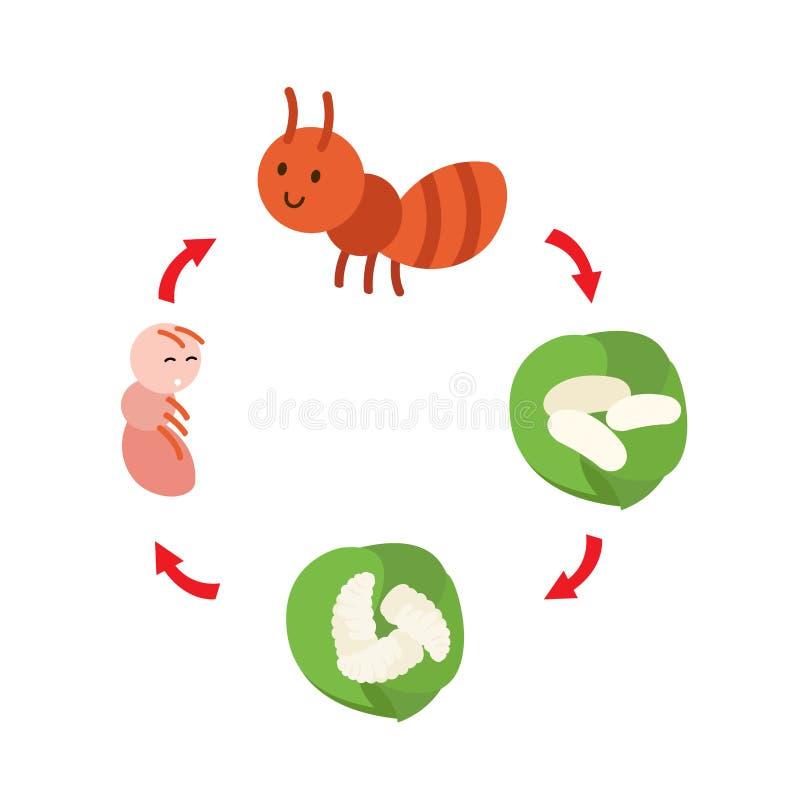 De cyclusmier van het illustratieleven vector illustratie