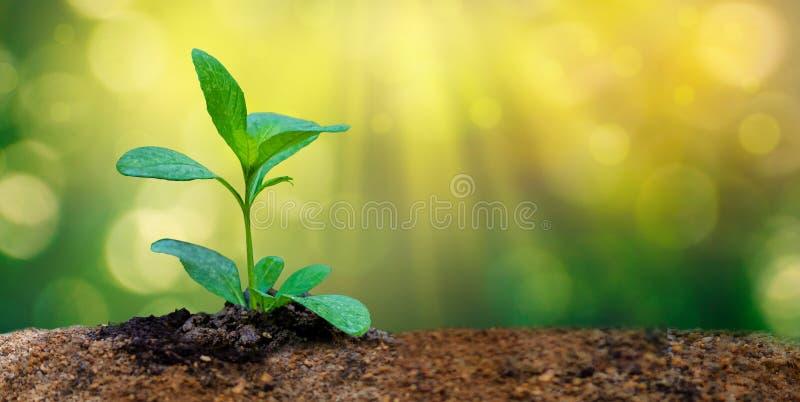 De Dag die van het wereldmilieu zaailingenjonge plant in het ochtendlicht planten op aardachtergrond stock foto's