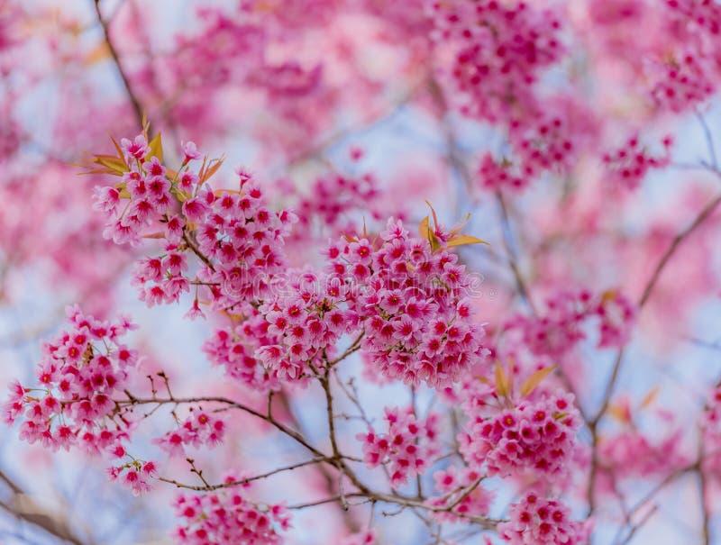 De dag van de valentijnskaart Mooie bloeiende roze bloemen stock fotografie