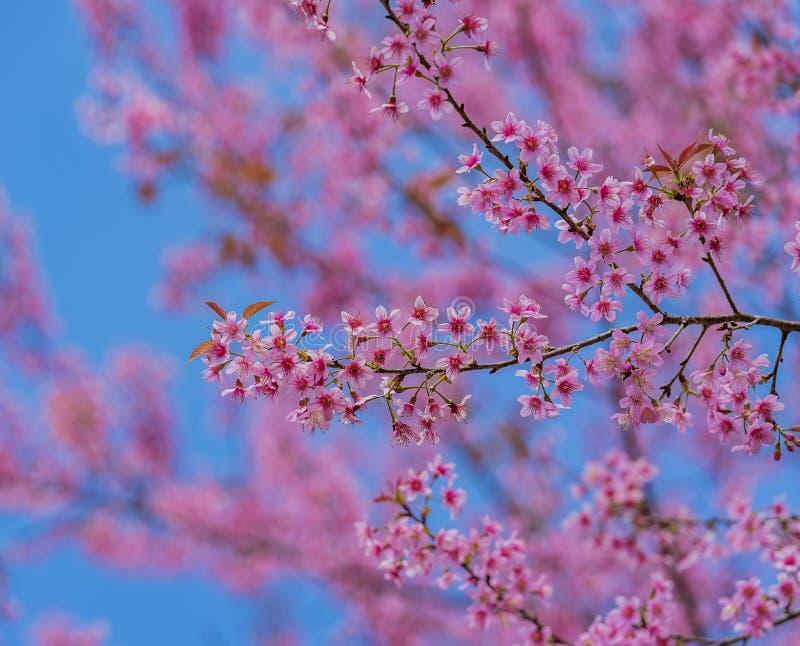 De dag van de valentijnskaart Mooie bloeiende roze bloemen royalty-vrije stock afbeelding