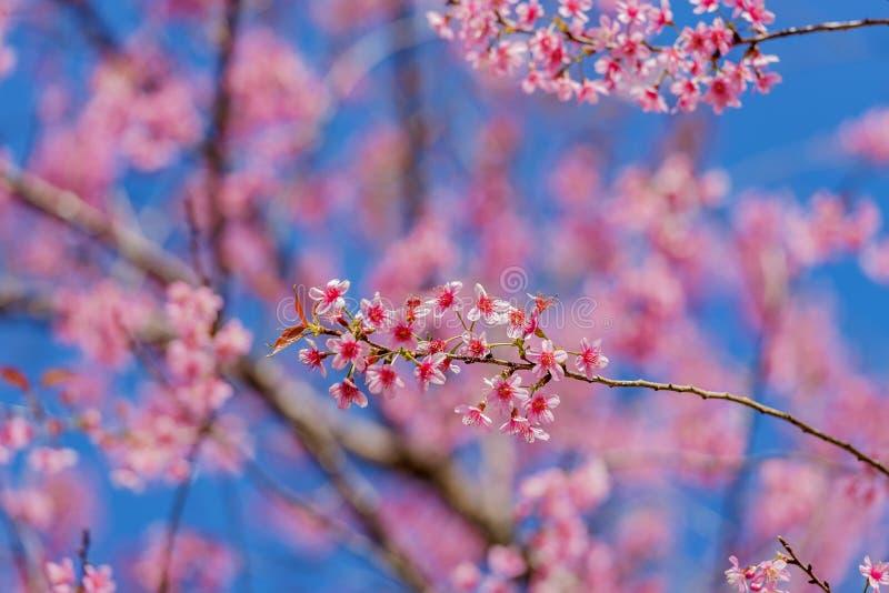 De dag van de valentijnskaart Mooie bloeiende roze bloemen stock foto's