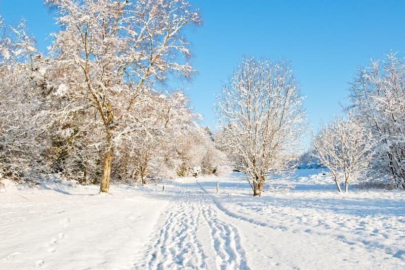 De dag van de winter royalty-vrije stock afbeelding