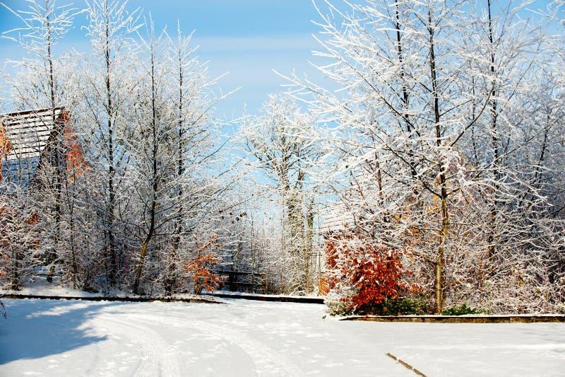 De dag van de winter in het dorp stock foto's