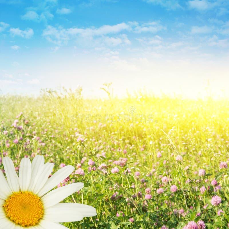 De dag van de zomer. stock afbeeldingen