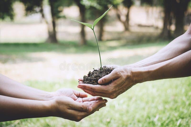 De dag van het wereldmilieu het reforesting, Handen van jonge mens het helpen plantte zaailingen en boom het groeien in grond ter stock foto