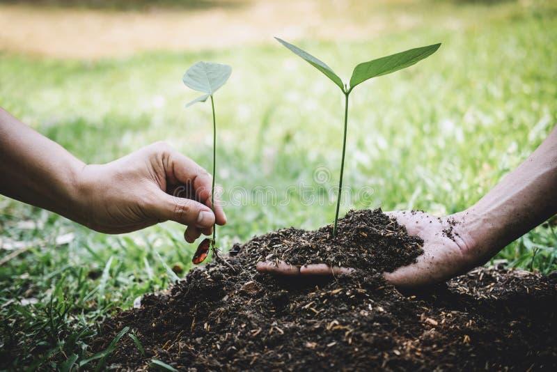 De dag van het wereldmilieu het reforesting, Handen van jonge mens het helpen plantte zaailingen en boom het groeien in grond ter royalty-vrije stock foto