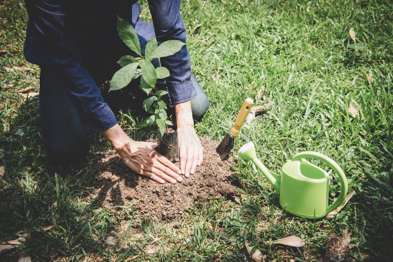De dag van het wereldmilieu het reforesting, Handen van de jonge mens plantte zaailingen en boom het groeien in grond terwijl het royalty-vrije stock afbeeldingen