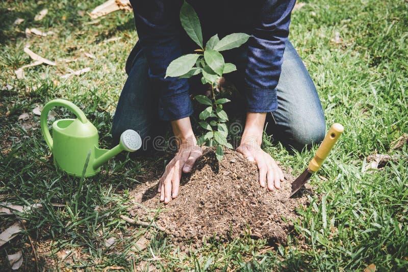 De dag van het wereldmilieu het reforesting, Handen van de jonge mens plantte zaailingen en boom het groeien in grond terwijl het stock fotografie