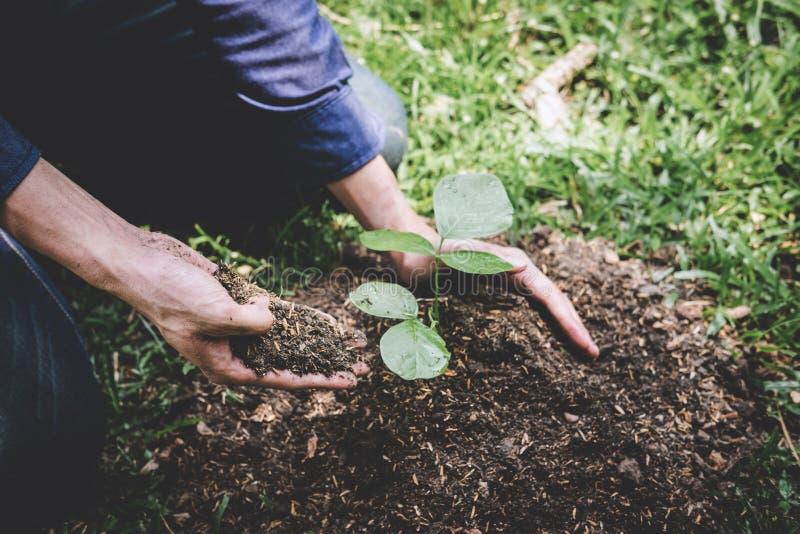 De dag van het wereldmilieu het reforesting, Handen van de jonge mens plantte zaailingen en boom het groeien in grond terwijl het stock foto