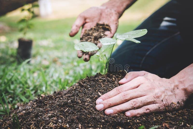 De dag van het wereldmilieu het reforesting, Handen van de jonge mens plantte zaailingen en boom het groeien in grond terwijl het stock afbeeldingen