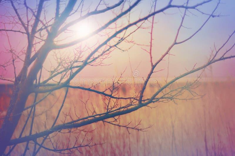 De Dag van de Hete Winter, een dromerig behang royalty-vrije stock afbeeldingen