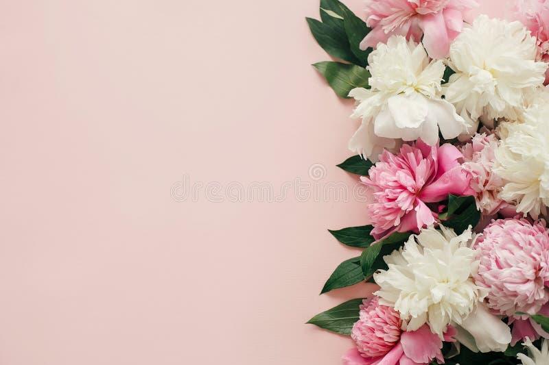De Dag van internationale Vrouwen De modieuze pioenenvlakte lag Roze en witte pioenengrens op pastelkleur roze document met ruimt stock foto's