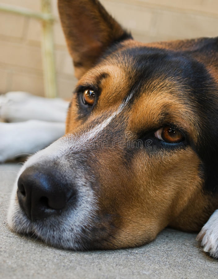 De dagen van de hond stock foto