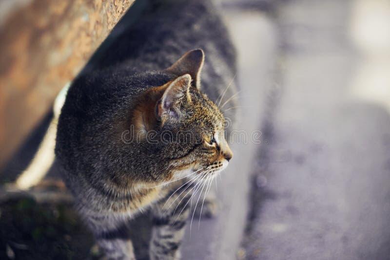 De dakloze gestreepte zwangere kat ziet weg eruit royalty-vrije stock afbeelding