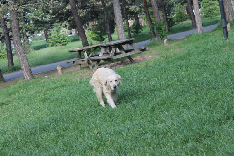 De dakloze hond in de aard met blured achtergrond stock fotografie